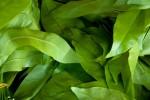 Thai Leaf