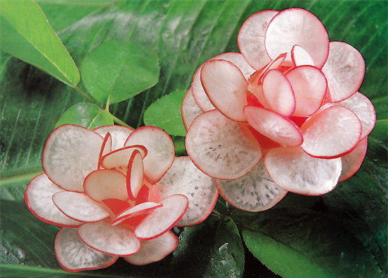 Radish Flower Carving
