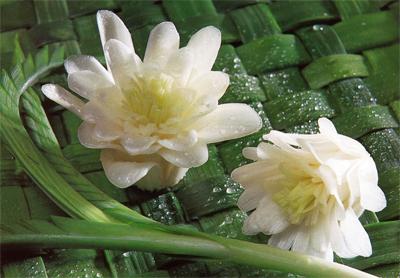Onion Flower Garnish