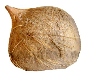 Mature Brown Coconut for Coconut Milk